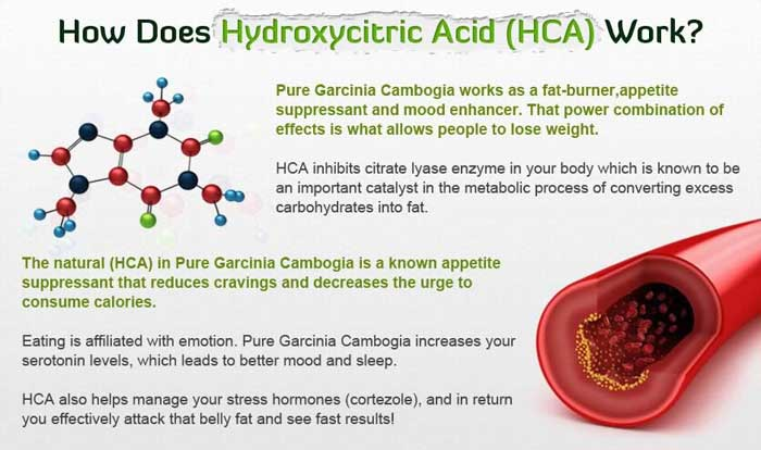 hydroxycitricacidwork pure asian garcinia